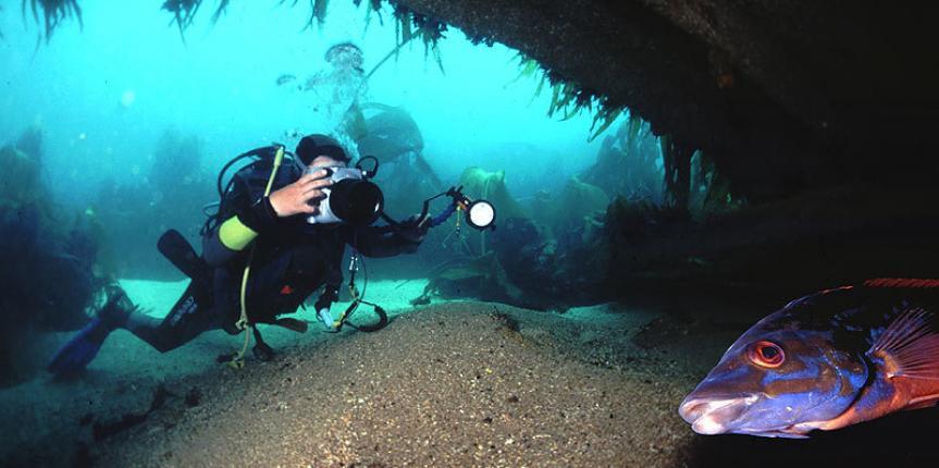 Plongée en Bretagne – Saint-Malo